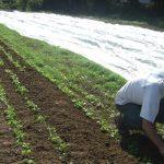 Outil d'aide à la protection des cultures en maraîchage biologique