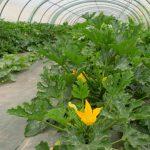 Conduire le processus de production en maraîchage biologique dans l'agroécosystème (FOAD)