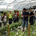 Produire des légumes biologiques