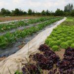 planches-legumes