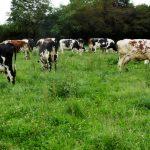 Eleveur laitier bio – BPREA en 2 ans
