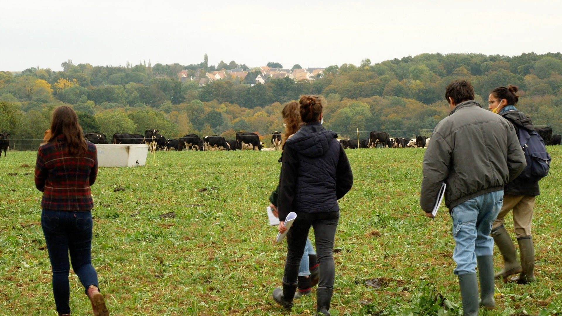 découvrir l'élevage laitier bovin bio en Normandie